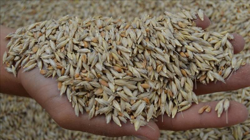 Arpa ve buğday ithalatına sıfır gümrük vergisi!